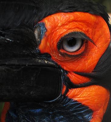 Birds eye. Photograph by Tim Irving