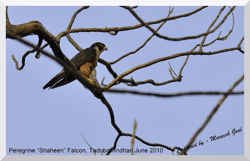 Tadoba Andhari Tiger Reserve, Maharashtra, India - A journey into the ...