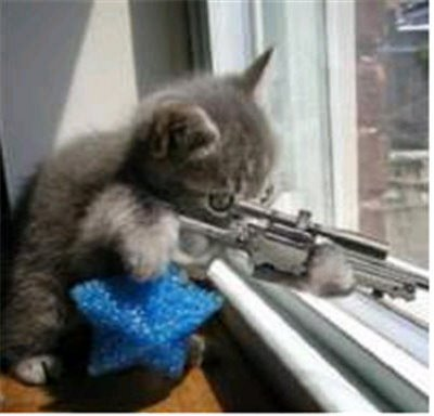 pics of funny cats with guns. cats are