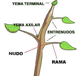 funcion de las hojas en la planta: