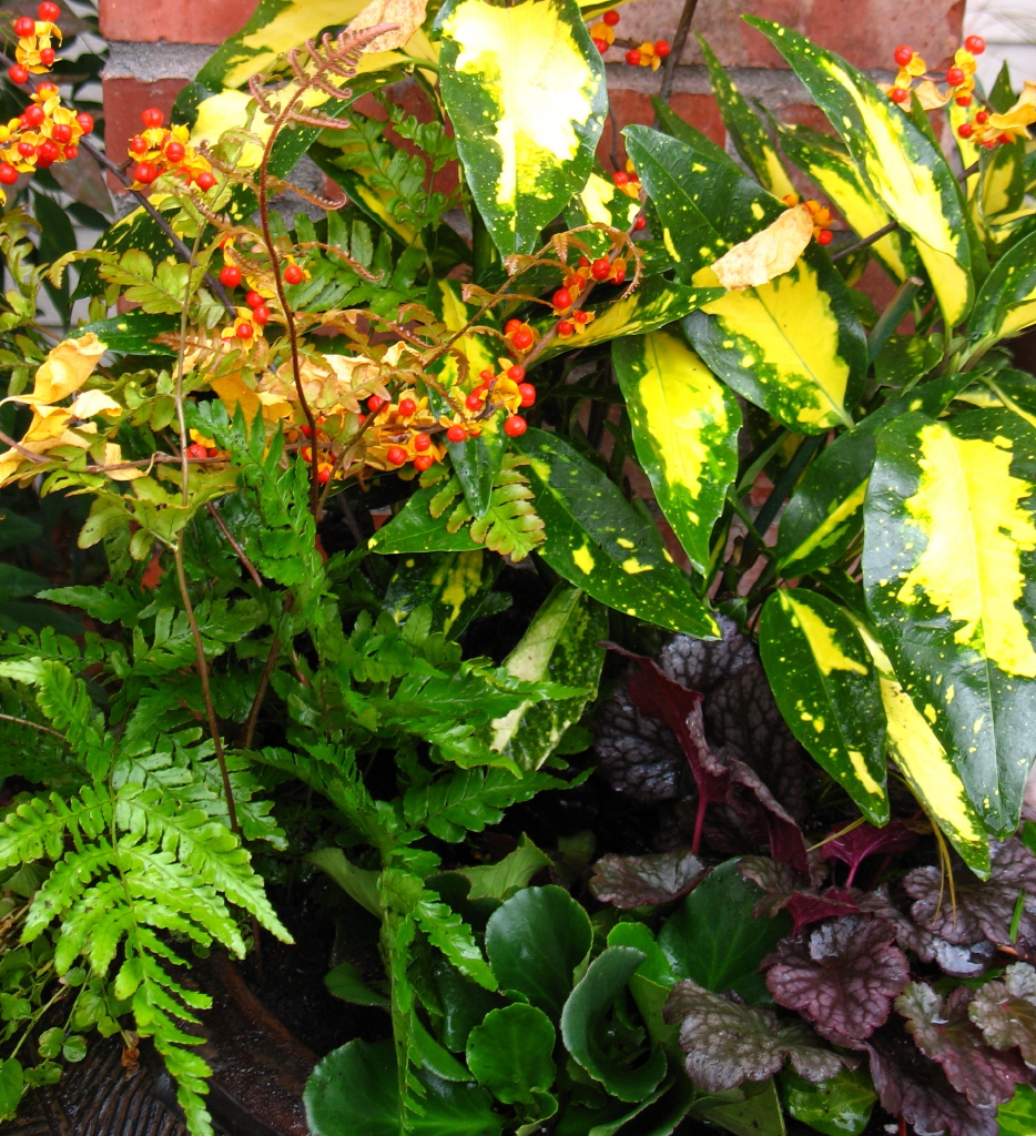 garden adventures for thumbs of all colors november 2010