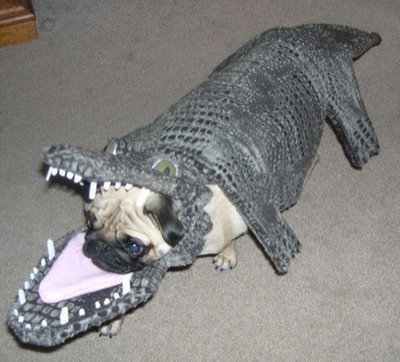 funny pictures of dogs in costumes. Halloween Costumes