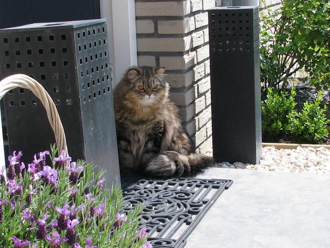 mijn lieve perzische kat; Bobo