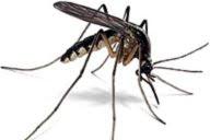 Ett moskitonät kostar runt femtilappen!
