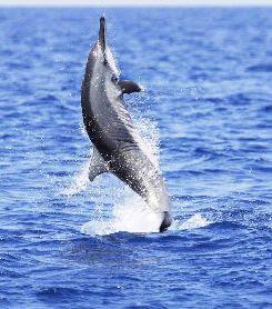 Delfines (Curiosidades)