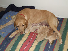 Xena and her 8 puppies whelped 2/3/09