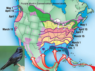 The Riddle of Bird Migration