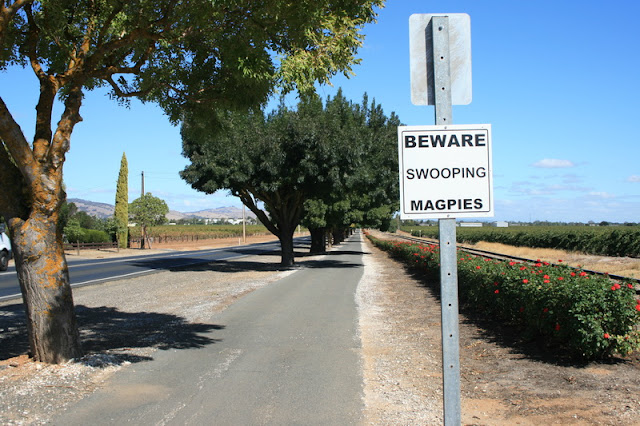 Beware Swooping Magpies Sign South Australia - © CKoenig