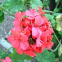 Flores de otoño, por Rtistic*