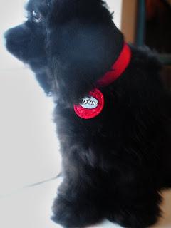 diy felt valentine pet collar