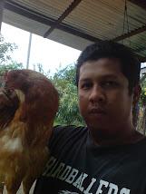 Ayam Kampung (Misi Kacukan)