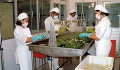 Lavado y Preparación de Frutas y Hortalizas p/ Procesos de Fabricación