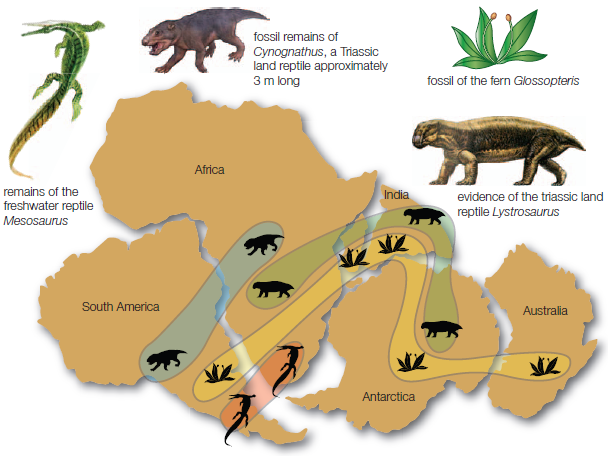theory and proof of pangaea essay