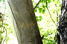 Finley's tree