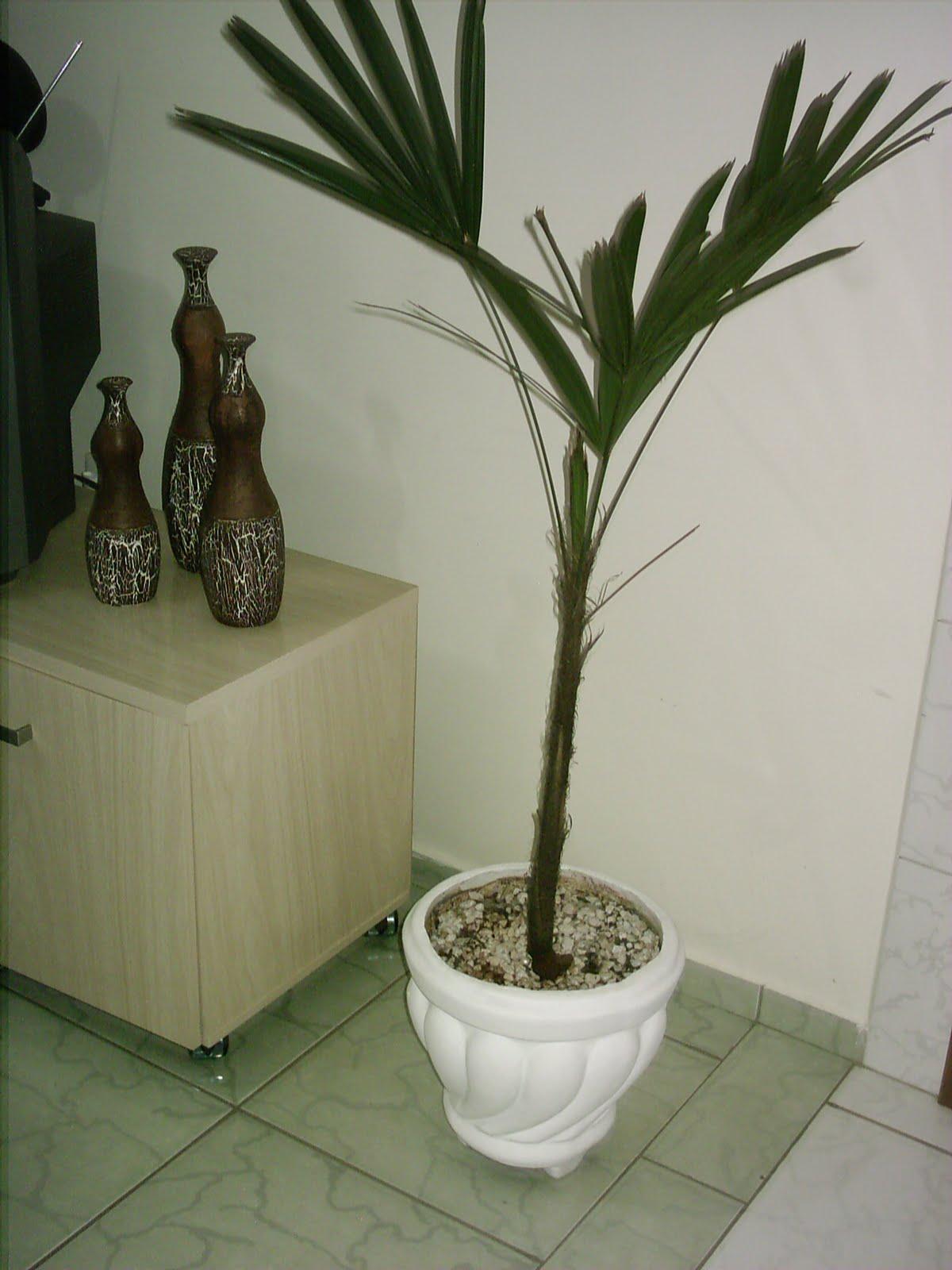 Tenho essa Palmeira Ráfia há mais de um ano exige pouca  #2A3019 1200 1600