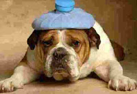 Image Result For Dog Nausea When