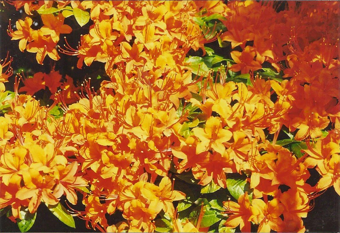[Orange+flowers]