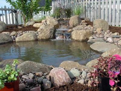 Laguinhos for Como criar caracoles de jardin