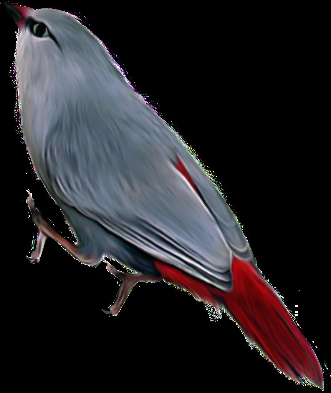 طيور خامات صور للتصميم-خامات للتصميم-تصاميم فو تشوب-ادوات المصمم