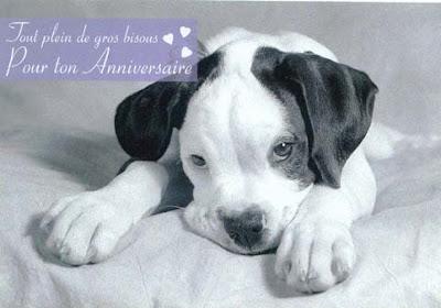 bon anniversaire chien