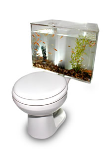 [Toilet+Aquariam.jpg]