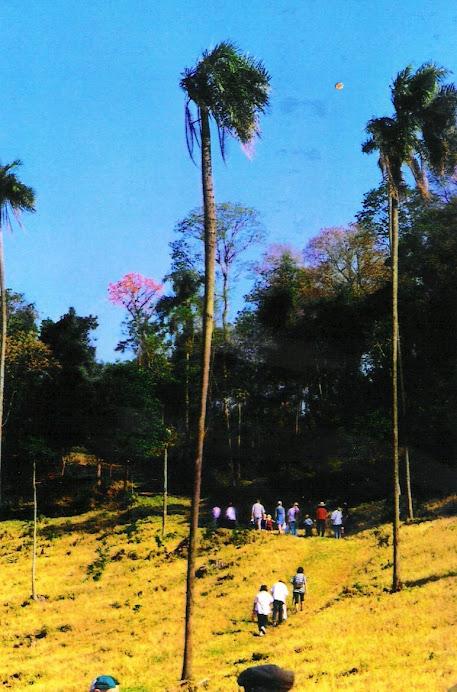 Caminantes hacia lapacho en flor