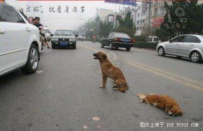 [Animals-&-Loyalty-3.jpg]