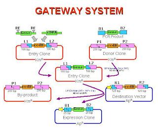 image gateway system wikipedia perangkat jaringan komputer