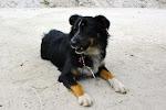Jetta = Dog