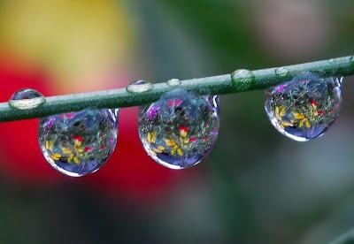 rain drops images