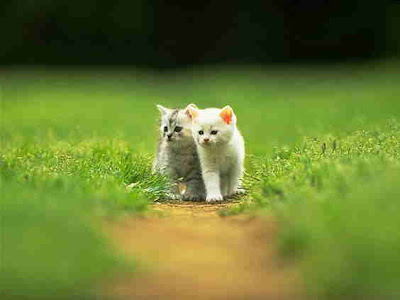 cute funny cats pictures. Photos of a Cute Cat Couple