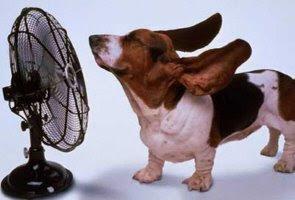 Cuidados com o seu bicho ele sofre com o calor
