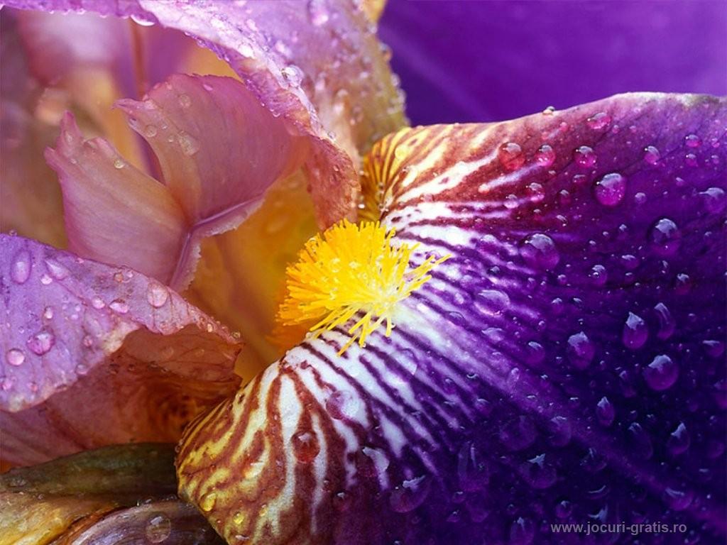 Desktopbilder, Hintergrundbilder, Wallpapers - Blumenbilder Hintergrundbilder
