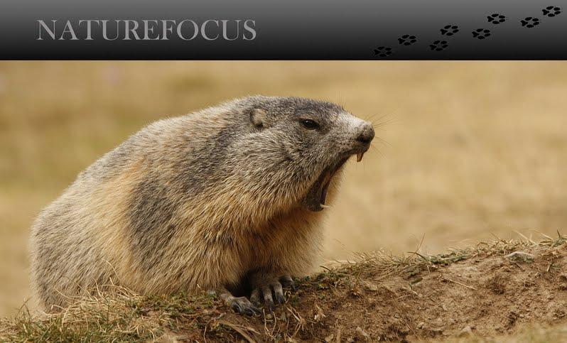 Naturefocus