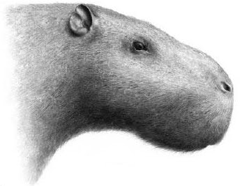 The largest rodent that ever lived