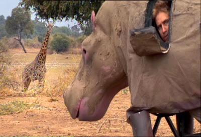Brady Barr pretending to be a hippo
