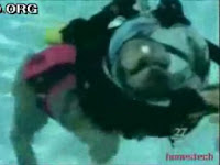 Scuba Diving Animals