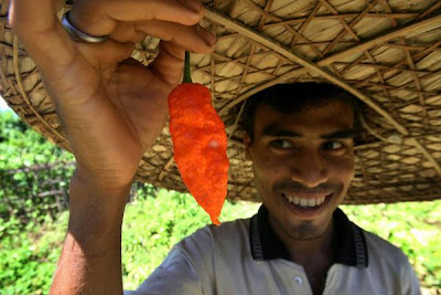 A farmer showing a Bhut Jolokia -- the world's hottest chile