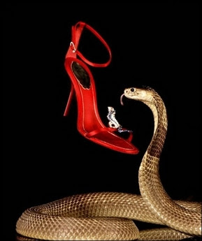 A real-life Egyptian cobra guarding a pair shoe