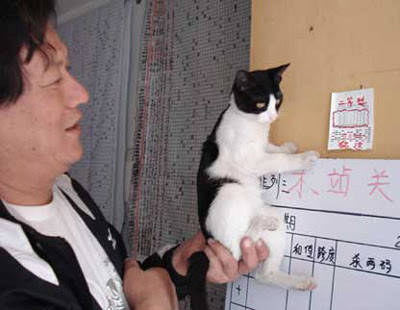 Cat that helped Wang win the lottery