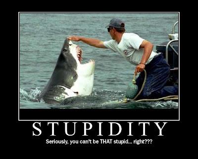 shark+stupid+man.bmp