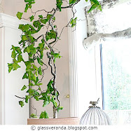 En levende vrihassel i krukke innendrs - A live corkscrew hazel in a pot indoors