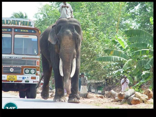 Kerala village pics