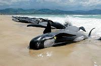 salvar delfines