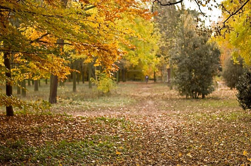 Paris for Bois de boulogne jardin d acclimatation