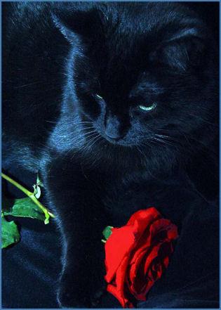 Benson � Blue Roses Sad Gloomy