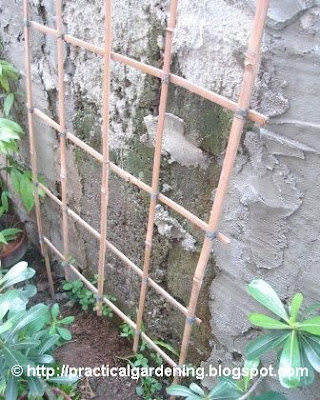 homemade fish trap plans html with How To Assemble Simple Bamboo Trellis on How To Assemble Simple Bamboo Trellis additionally Deer Hunting Shooting House Plans further Techniques For Continuous Flowering In besides Primitivepatterns further Diy Fish Aquarium Decorations.