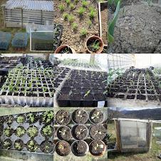 planter eco