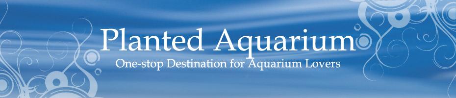 Planted Aquarium: One-stop Destination for Aquarium Lovers