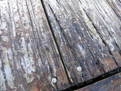 Dover Projects Refinishing A Pressure Treated Deck